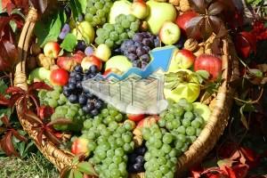 Exportsteigerung Obst und Gemüse